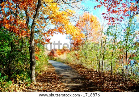 Fall - stock photo