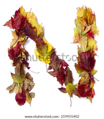 Fall alphabet letter N - stock photo