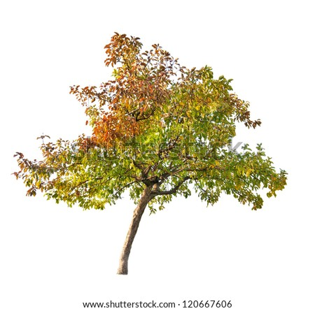 fall apple-tree isolated on white background - stock photo