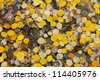 Fall Aspen Leaves Background Texture Pattern - stock photo