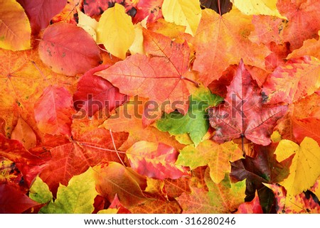 Fall autumn leaves background sharp and clean - stock photo