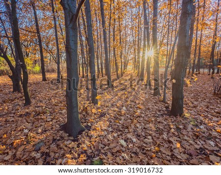 Fall. Autumnal Park. Autumn Trees and Leaves - stock photo