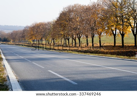 fall, bright yellow trees along the route, a subject seasons and the nature