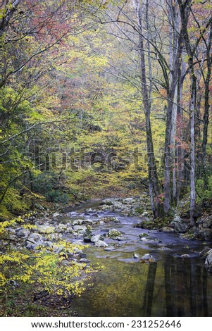 Fall color along the Little River in Great Smoky Mountains National Park, Tennessee.  - stock photo