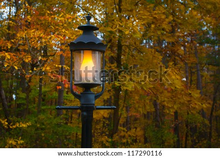 Fall Color and Lamp