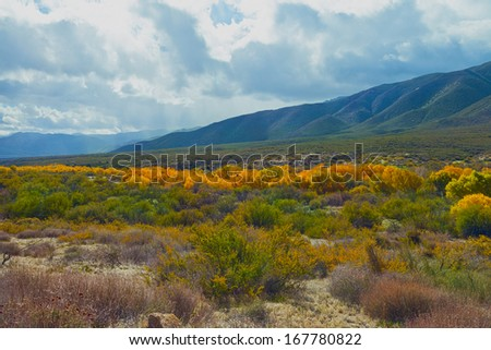 Fall color in the valley at Warner Springs, California - stock photo