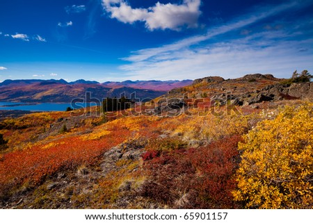 Fall-colored boreal forest at shores of Fish Lake, Yukon Territory, Canada. - stock photo