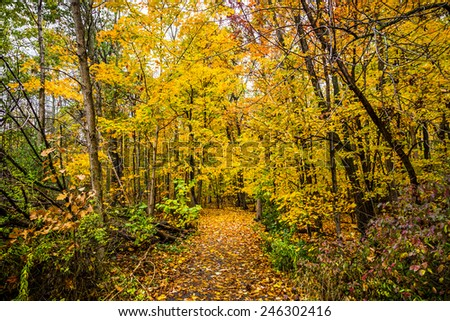 Fall Colored Forest - stock photo