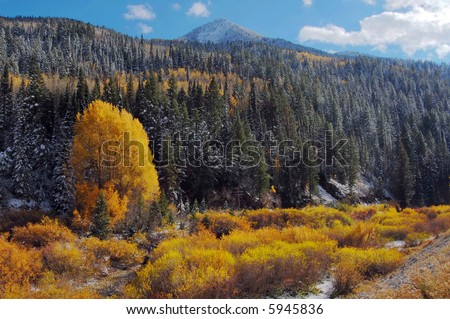 Fall colors- Big Cottonwood Canyon, Utah