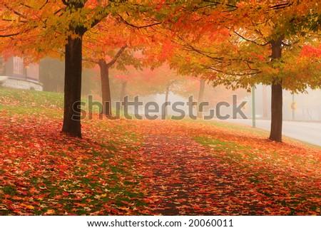 Fall colors, Deer Lake Vancouver, Canada - stock photo