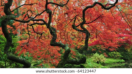 Fall colors in a japanese garden - stock photo