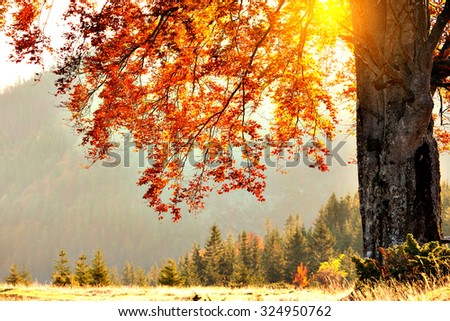 fall colors tree at sunny day - stock photo