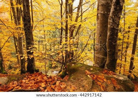Fall colors woodland