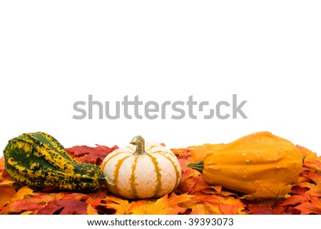 Fall coloured leaves making a border on a white background, Fall Leaves