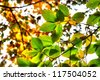 Fall foliage - stock photo
