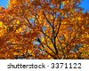 Fall foliage at the Boston Common and Public Garden - stock photo