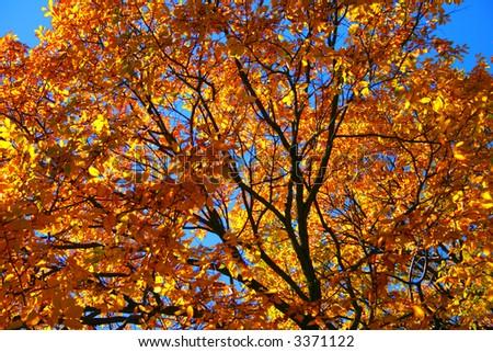 Fall foliage at the Boston Common and Public Garden - stock photo