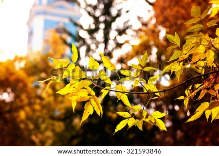 Fall foliage branches day church building - stock photo