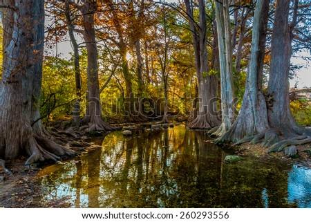 Fall Foliage on Cibolo Creek, Texas.  Sun peaking through. - stock photo
