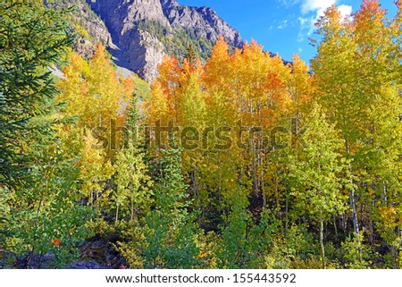 Fall Foliage with Aspen Trees, Rocky Mountains, USA - stock photo