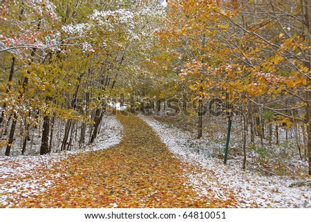 Fall forest path - stock photo