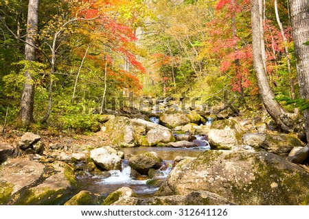 fall forest stream Elomovsky with red maple trees in russian Primorye  - stock photo