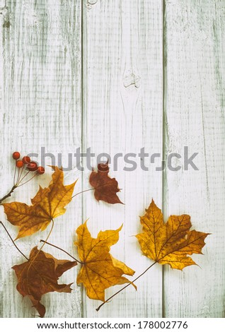 Fall Golden and brown Leaves on rustic white board background with room or space for copy or text.  Vertical with vintage camera instagram treatment - stock photo