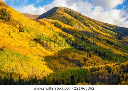 Fall Hills of Colorado. Yellow Aspen Trees Forest near Aspen, Colorado, USA - stock photo