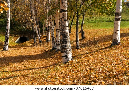 Fall in a river side park - stock photo