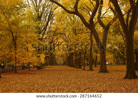 Fall landscape - stock photo
