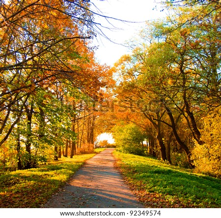 Fall Landscape Falling Leaves - stock photo