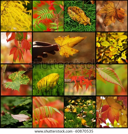 Fall leaf collage - stock photo