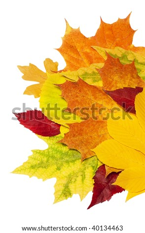Fall leafs isolated on a white background