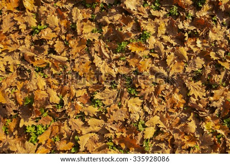 Fall leaves background - stock photo