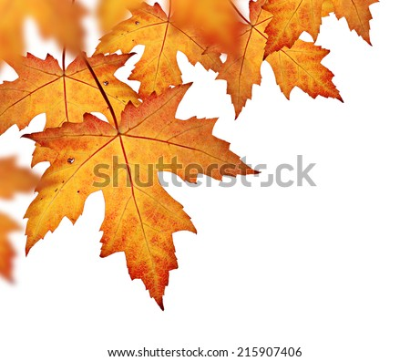 Fall leaves border, with orange and red leaves isolated on a white background  - stock photo
