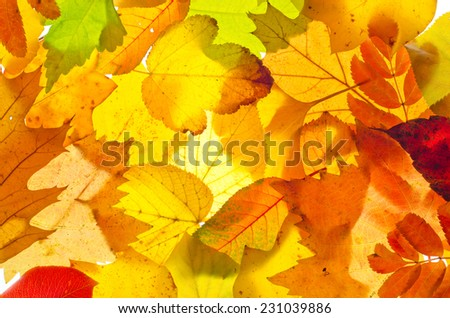 Fall leaves for an autumn background - stock photo