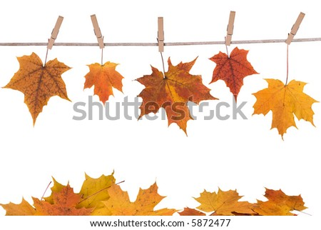fall leaves hanging on a clothesline isolated on white - stock photo