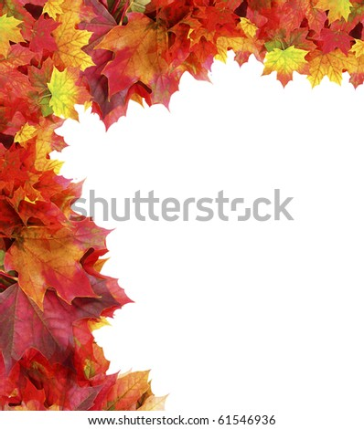 fall maple foliage border