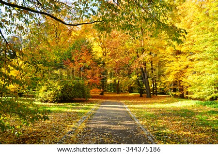 Fall nature, road to forest - stock photo