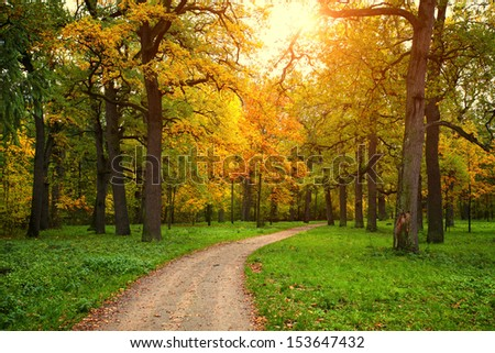 fall season in park with pathway between the trees at sunny day - stock photo