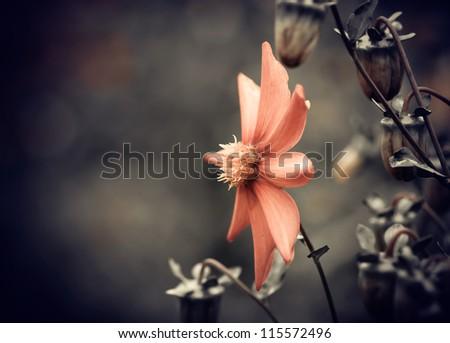 fall season red flower closeup - stock photo