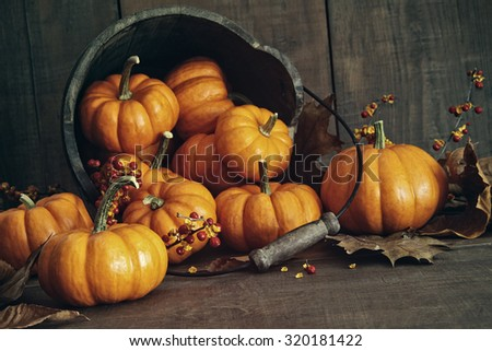 Fall still life with small pumpkins in wooden bucket