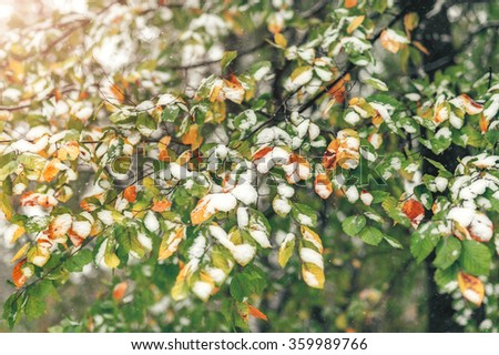 Fall tree branch with bright green and orange leaves under snow. Snow falling. Background image.