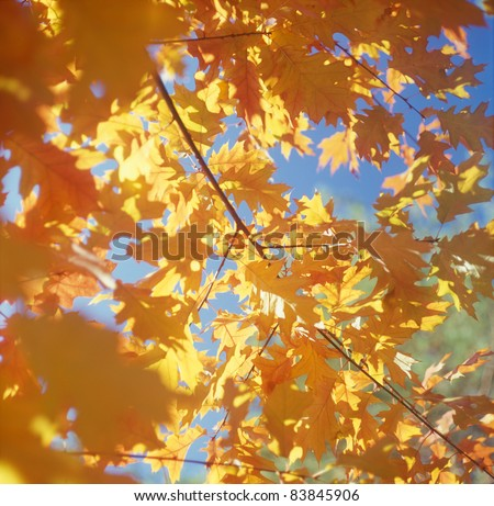 Fall trees against the blue sky. High resolution. - stock photo