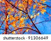 Fall Wallpaper Sunlit Foliage - stock photo