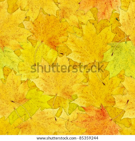 Fall yellow leaves seamless background - texture pattern for continuous replicate - stock photo