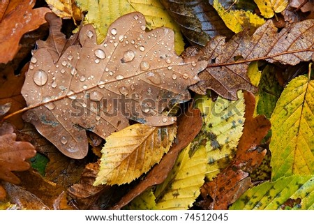Fallen autumn leaves - stock photo