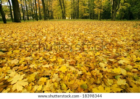 Fallen autumn leaves, October, Russia
