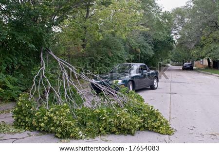 Fallen Branch - stock photo