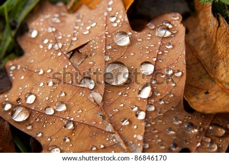 Fallen leaf with raindrops - stock photo